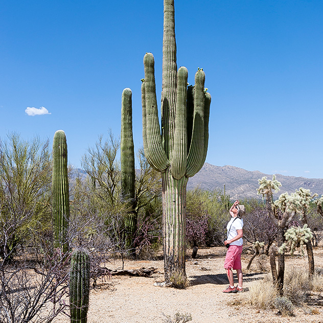 Arizona Sonora Desert Museum Around Hacienda Del Sol Guest Ranch Resort, Tucson