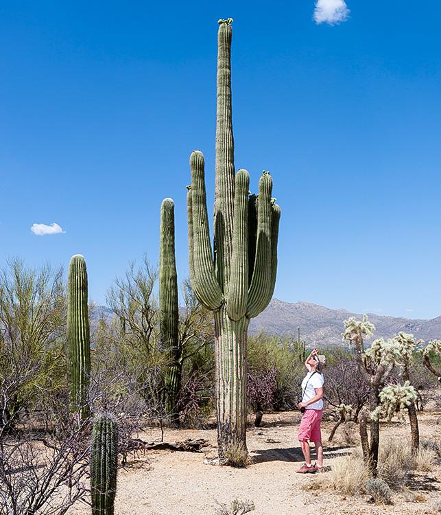 The Arizona Sonora Desert Museum around Hacienda Del Sol Guest Ranch Resort, Tucson