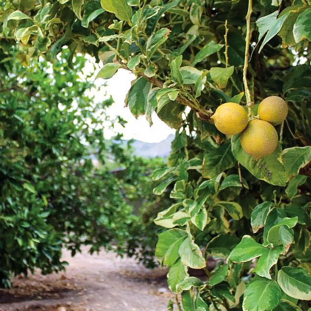 Organic Gardens at Hacienda Del Sol Guest Ranch Resort, Tucson